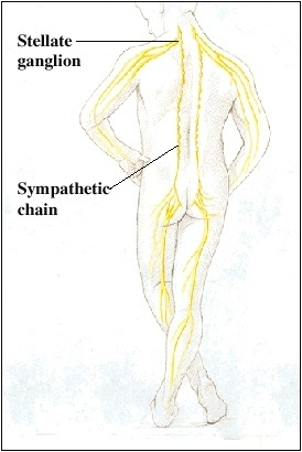 Sympathetic Block Diagram on sympathetic nervous system diagram