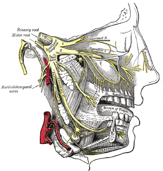 Face Pain Diagram