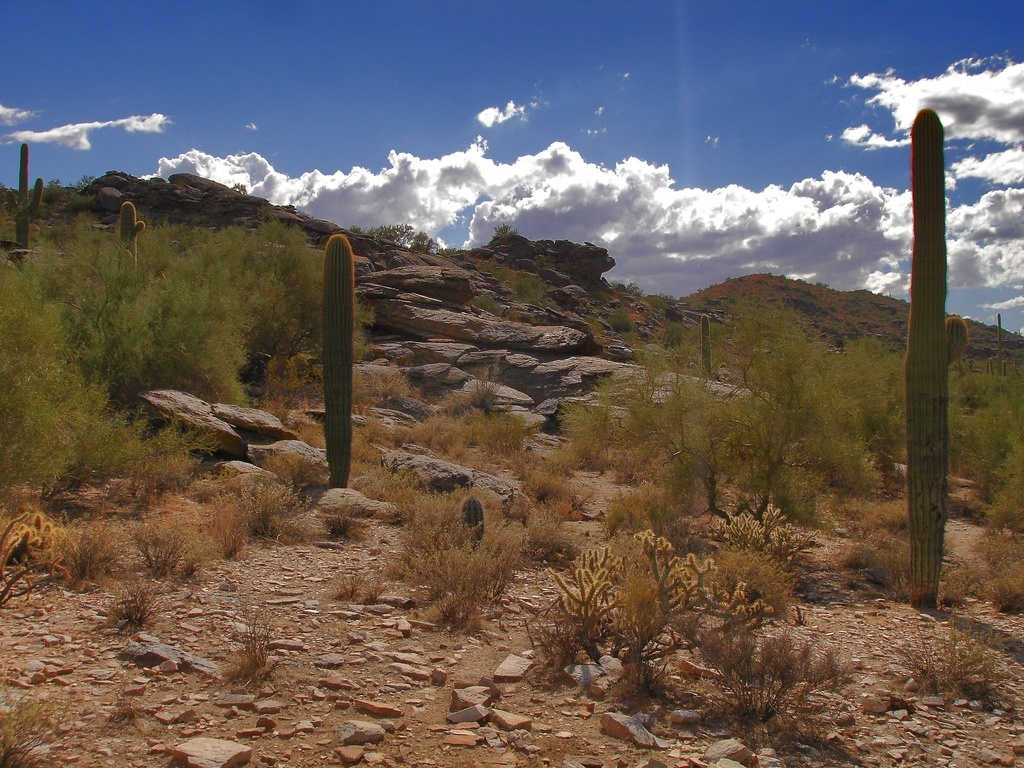 Phoenix Pain Friendly Hiking Trails Arizona Pain