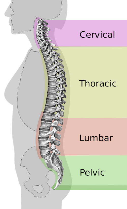 Neck Pain Anatomy | Arizona Pain